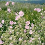 Blumen auf der Halde Hoheward